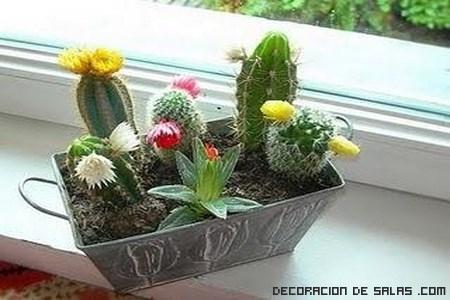 cactus con flores para decorar