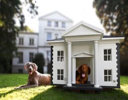 casas en blanco para animales