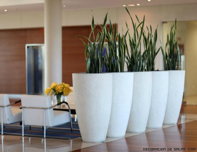 Plantas para decorar salones
