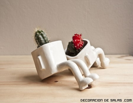 maceteros para cactus