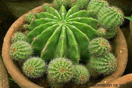planta espinas