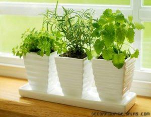 Plantas aromáticas para tu decoración