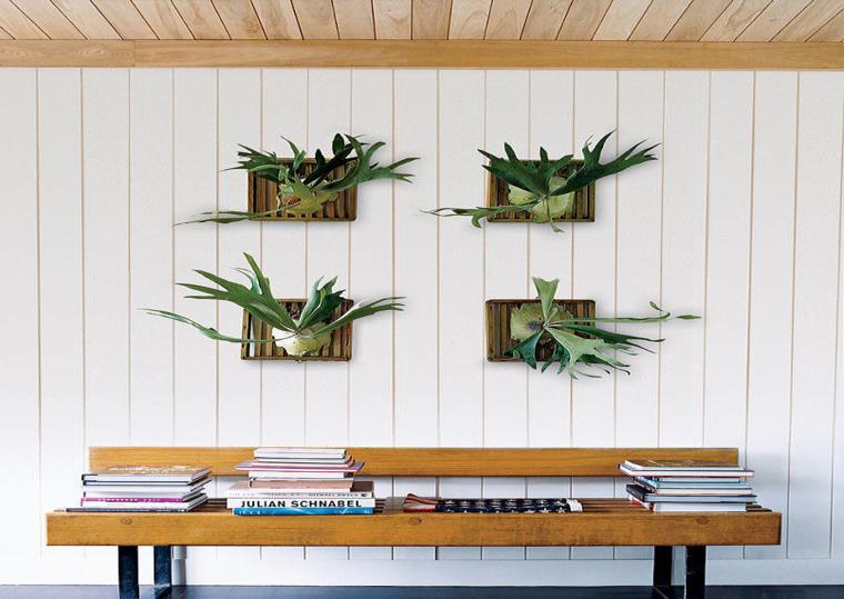 plantas para pared