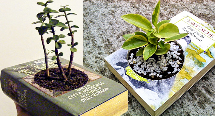 plantas dentro de libros