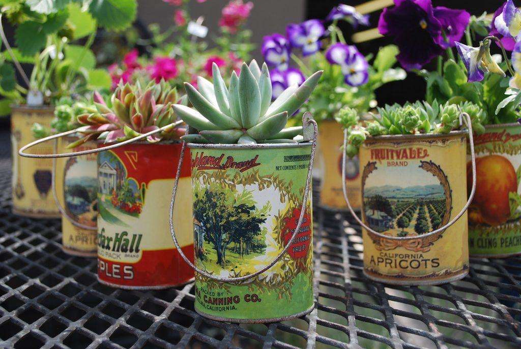 plantas en botes