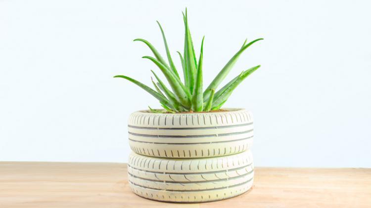 planta con maceta de neumático