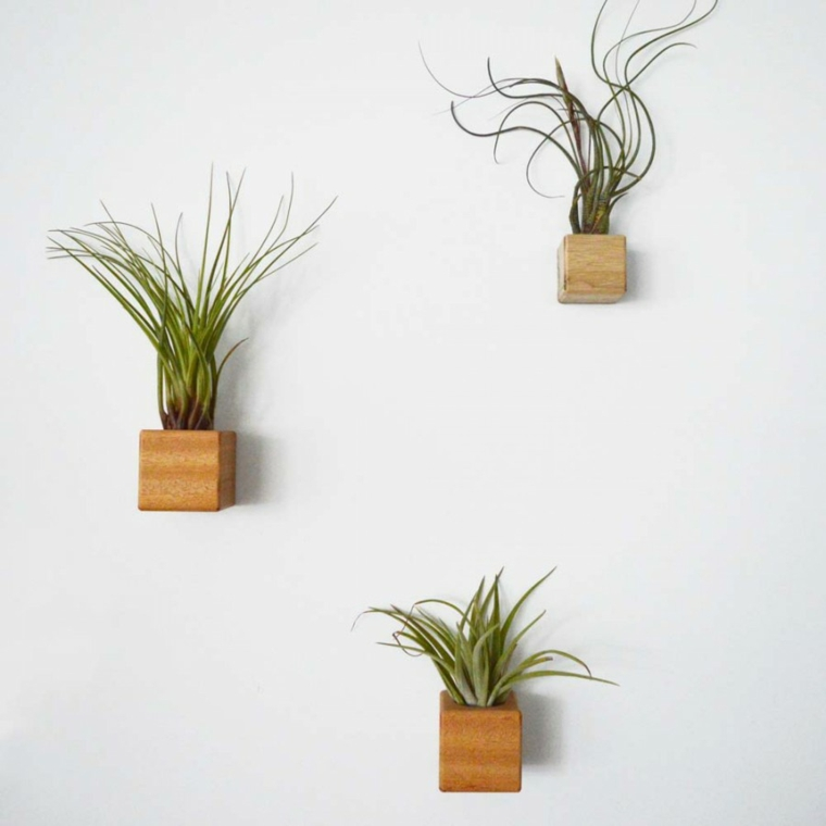 Plantas altas