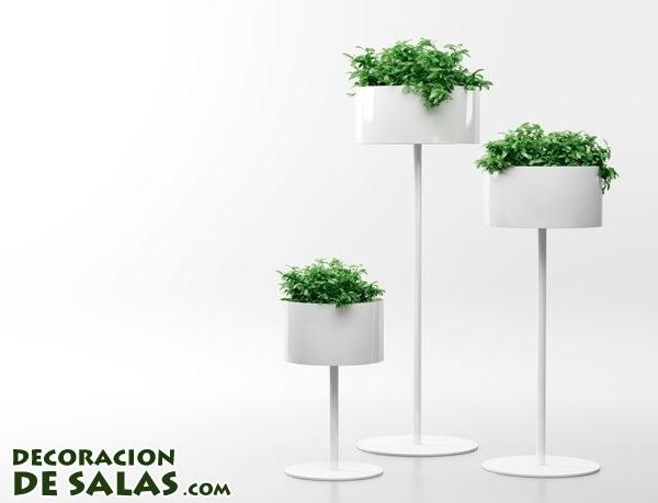 MaceterosPara comen originales para tus plantas de interior