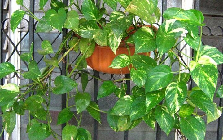 planta de exterior con hojas