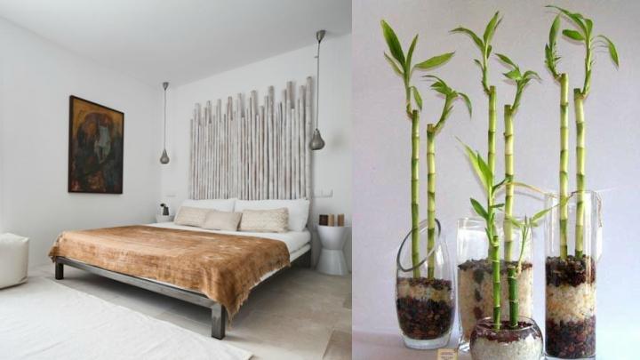 Decorar con Bambu