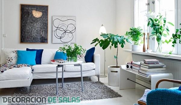 Plantas ornamentales para decoración