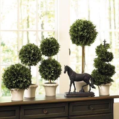 plantas con macetas blancas